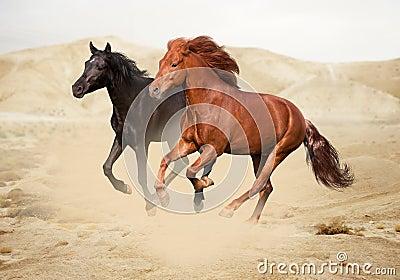 Chestnut and black horses in desert