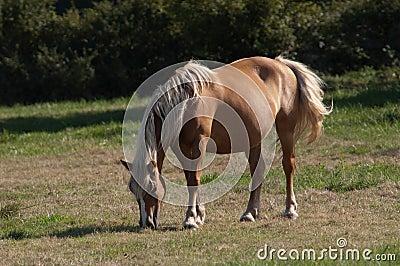 Chestnut Horse. Stock Photo - Image: 62848451 - photo#36