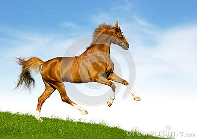 Chestnut horse gallops on a green hill