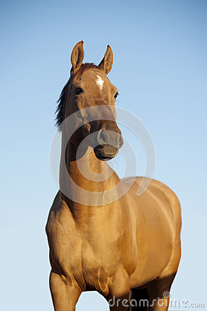 Free Chestnut Horse Portrait Stock Photography - 49249612