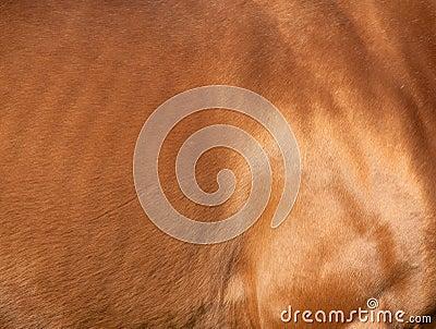 Chestnut horse skin