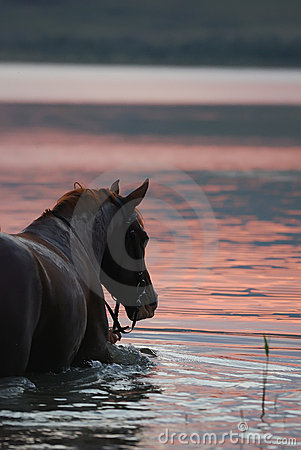 Chestnut horse standing in the water