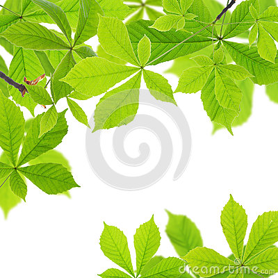 Free Chestnut Leaves Stock Images - 53975724