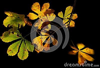 chestnut leaves in autumn