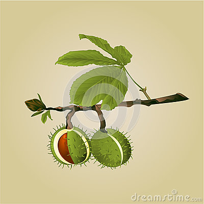 Free Chestnut Tree Conkers With Leaves Vector Stock Photo - 78115920