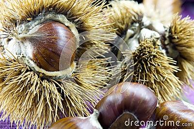 Chestnuts in autumn 5