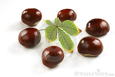Chestnuts with leaf
