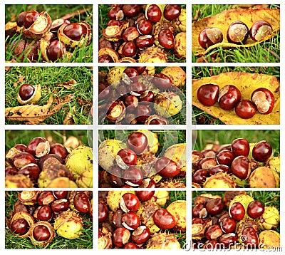 Chestnuts set