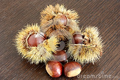 Chestnuts and their chestnut curls