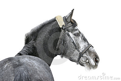 Cheval d isolement