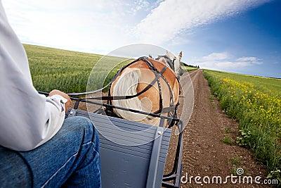 Cheval et chariot