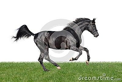 Cheval galopant dans l herbe d isolement sur le blanc