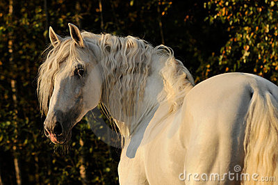 Cheval, white horse in autumn