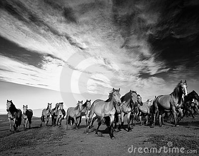 Chevaux Sauvages Photo stock - Image: 17636850