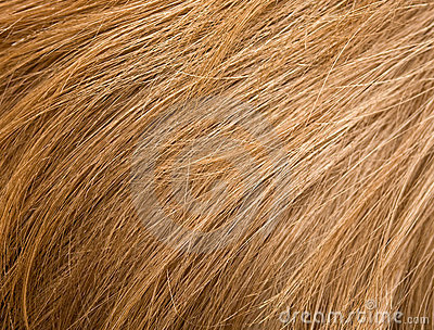 Cheveu blond