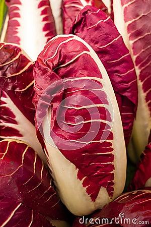 Chicória italiana, radicchio, intybus de Cychorium