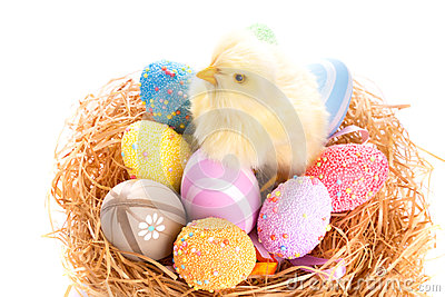 Easter eggs and chick in the nest