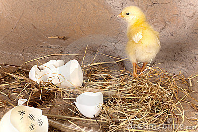 Chick and egg with calendar