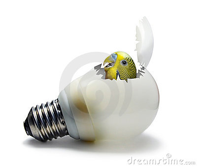 Chick hatching from a fluorescent lamp