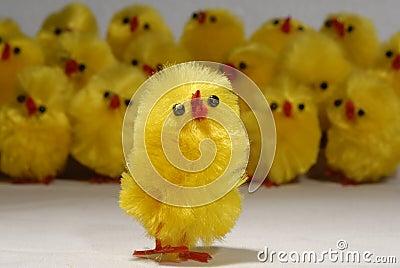 Chick soloist & chorus