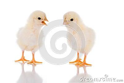 Chick Talk