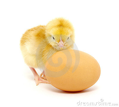 Free Chicken And Egg Royalty Free Stock Photography - 18748557