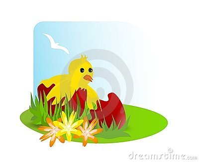 Chicken in a broken egg, cdr vector