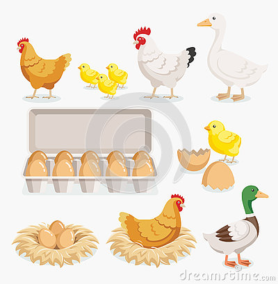 Free Chicken Duck Chick Egg Packaging And Chicken Eggs On The Nests. Royalty Free Stock Images - 80651279