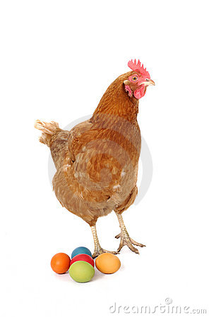 Chicken with easter eggs