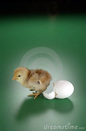 Free Chicken & Egg Stock Photos - 1446093