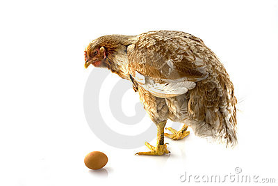 Chicken-with-egg