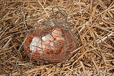 Chicken eggs in basket in straw