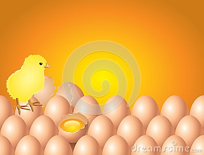 Chicken on eggs easter background in