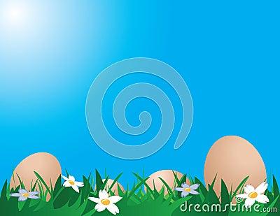 Chicken eggs on the grass