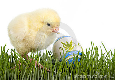 Chicken with painted egg