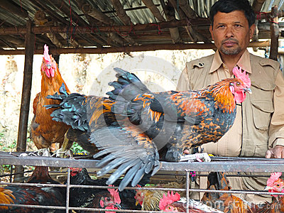 Chicken seller in Nepal Editorial Photo