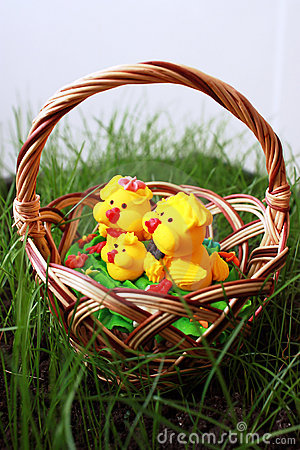Chickens in a basket on a grass