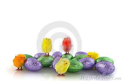 Chickens and chocolate eggs