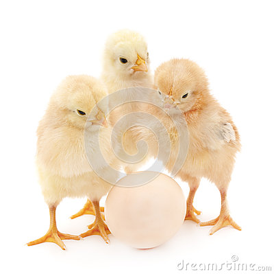 Free Chickens With Egg. Royalty Free Stock Image - 57188046
