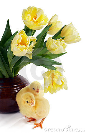 Free Chicks And Tulips Stock Photo - 2103460