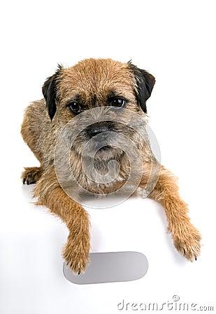 Chien Terrier De L'anglais De Cadre Image libre de droits