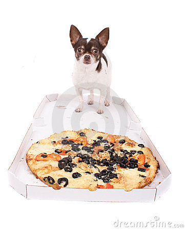 Free Chihuahua Stock Photography - 3624032