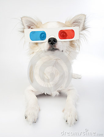 Chihuahua with 3d glasses