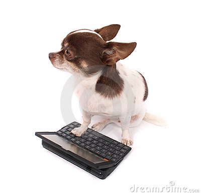 Free Chihuahua And Her Portable PC Stock Images - 3409094