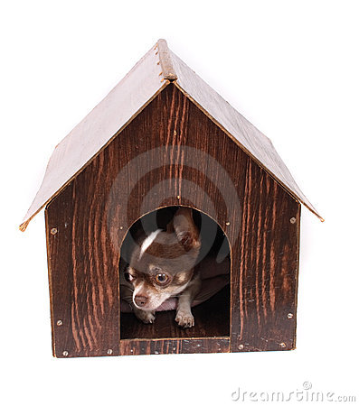 Free Chihuahua At Her Home Royalty Free Stock Image - 3296346