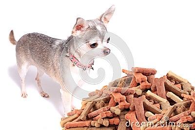 Chihuahua dog and treats