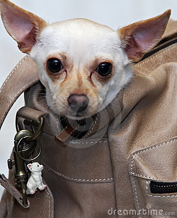 chihuahua doggy bag