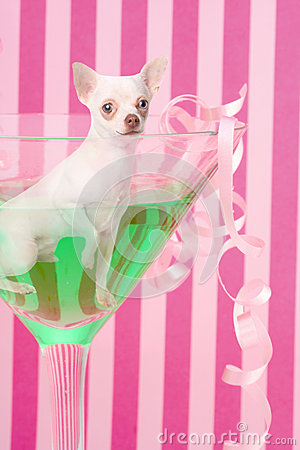 Chihuahua inside party glass