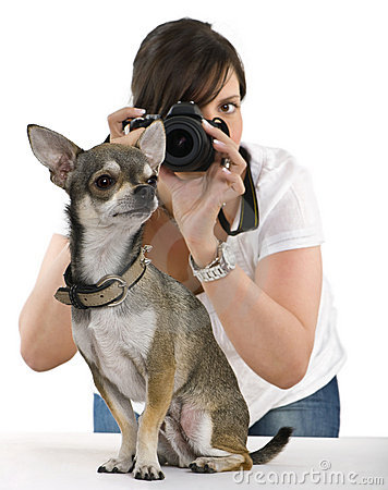Chihuahua with a photographer behind