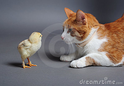Chik and cat